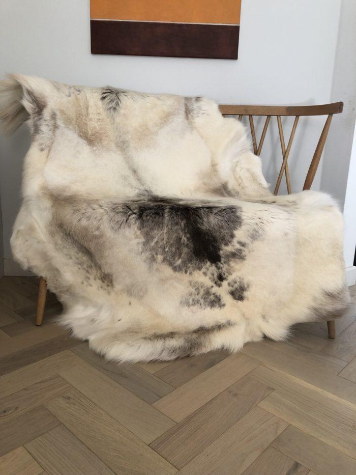huge reindeer white